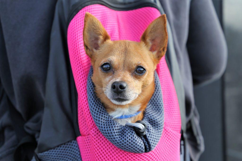 Chihuahua tas